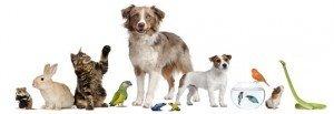 Animaux de companie en Chine  dans animaux de compagnie en Chine animaux2-300x103